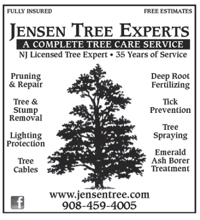Jensen Tree Experts